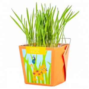 Herbe pour chat